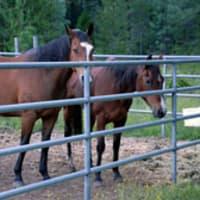Horse corrals at St. Bernard Lodge