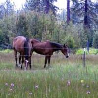 Horses at St. Bernard Lodge