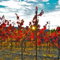 Fall in Sonoma