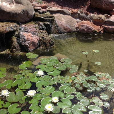 the pond at sedona views b&b