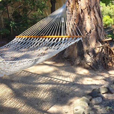 Hammock amid the ponderosa pines