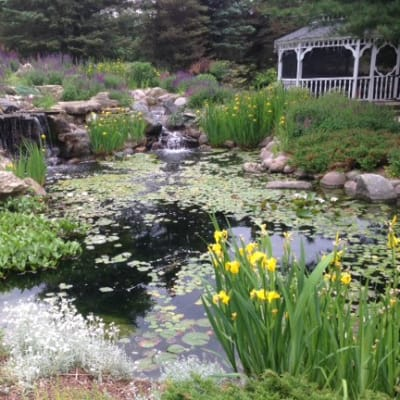 Nature Pond in Summer