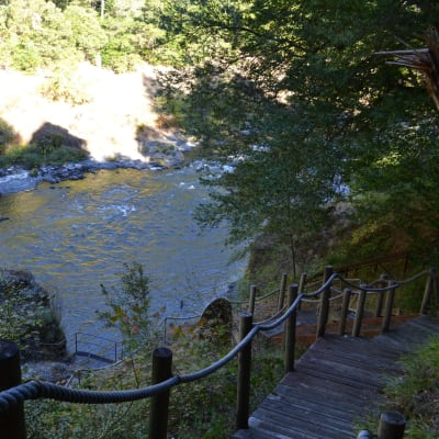 walking path to river