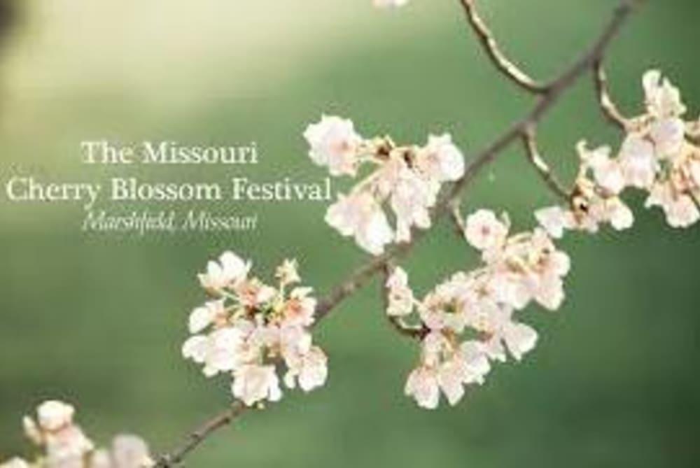 Missouri Cherry Blossom Festival Memories