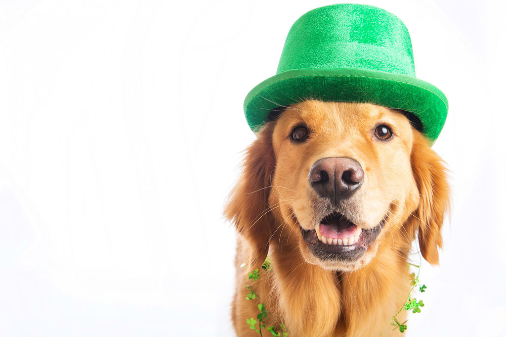 How To Celebrate St. Paddy's In Appleton