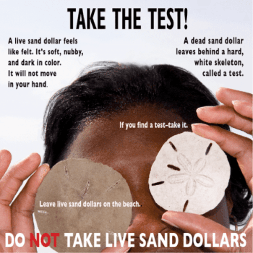 Sand Dollars: Take the Test