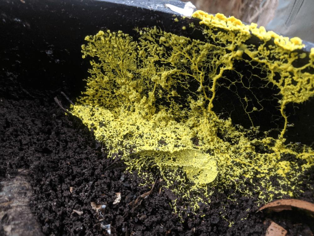 A Symphony of Slime Molds