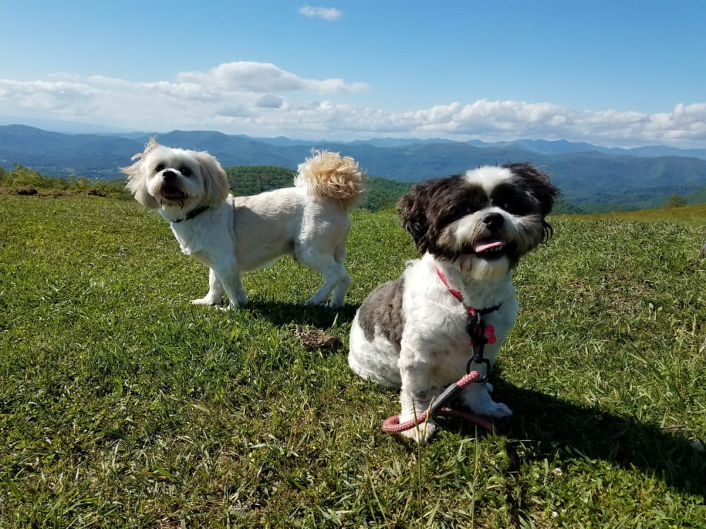A Dog's Blog: A Day of Hiking at Bearwallow Mountain