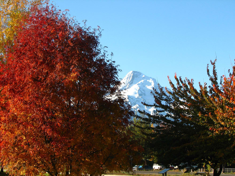Fall Foliage in the Columbia Gorge and the Mt Hood National Forest