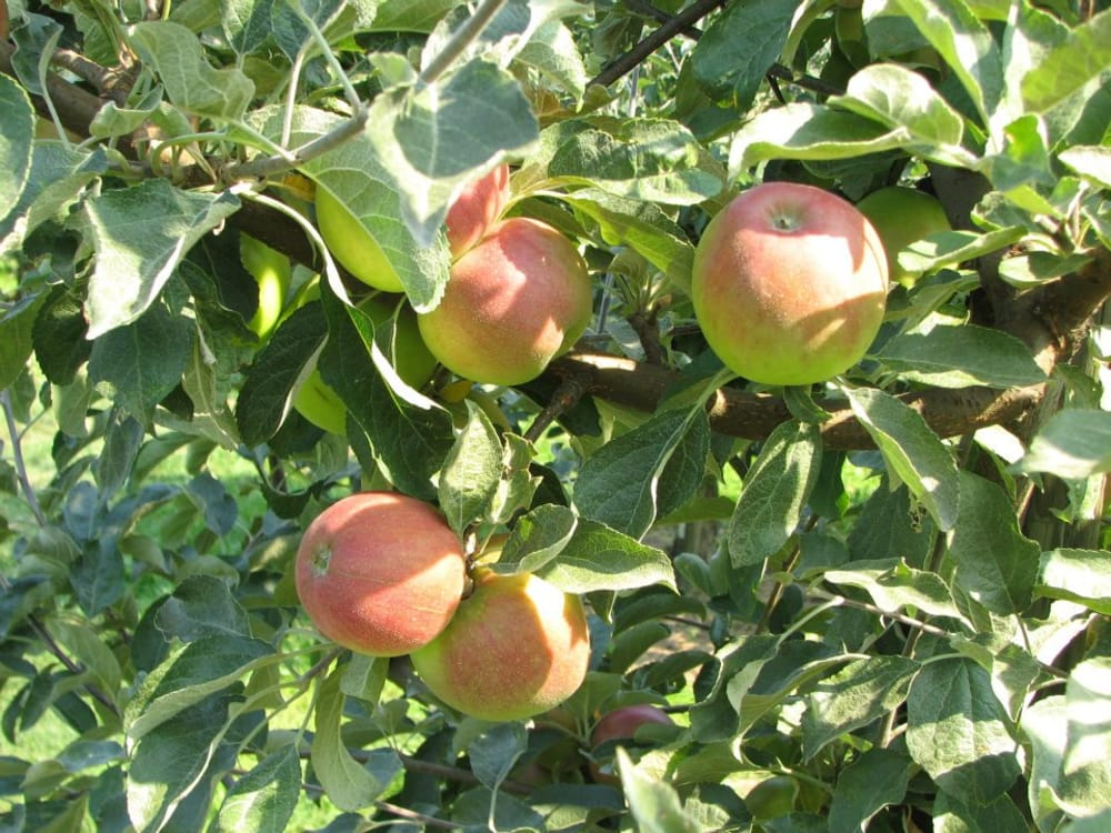 Packer Orchards, Bakery and now The Farm