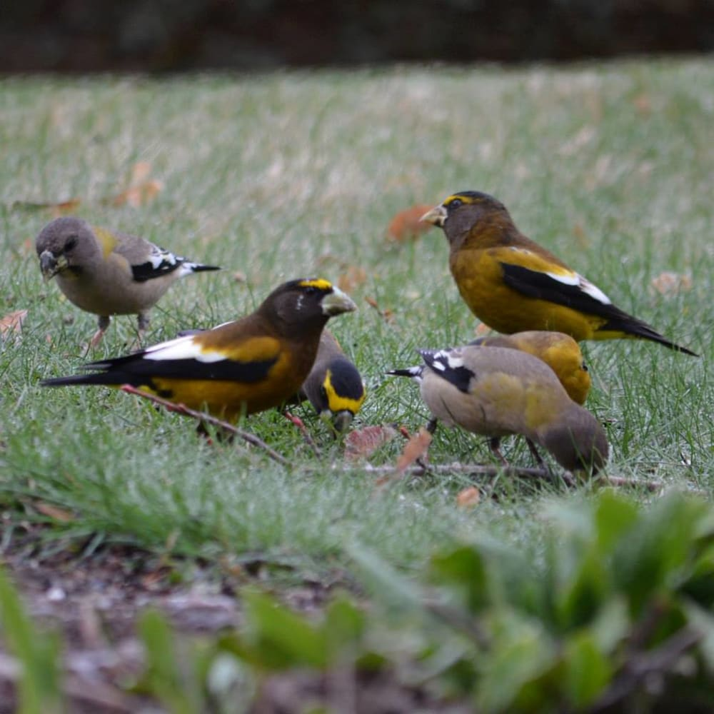 Spring and Summer Birds are returning to the Old Parkdale Inn Gardens