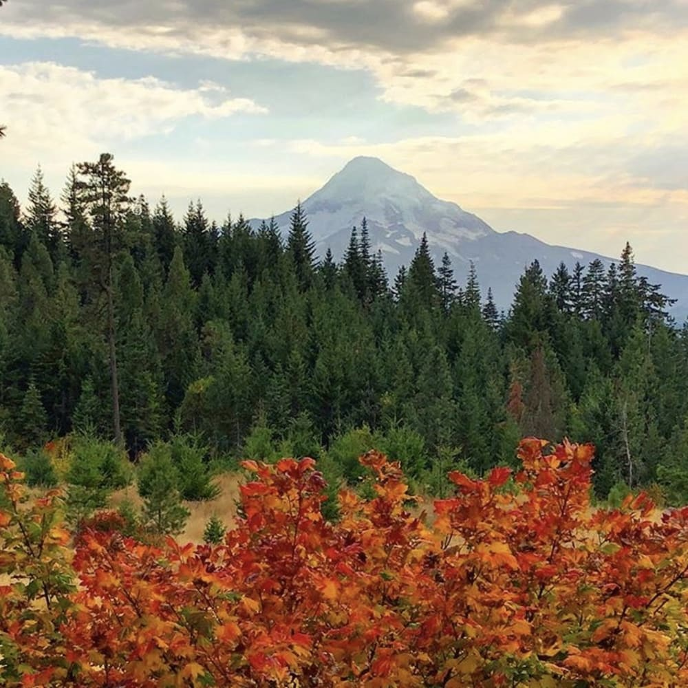 Only Three Reason to Visit the Hood River Valley this Fall