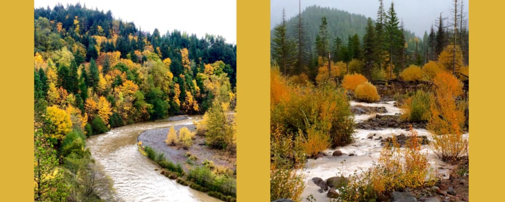 Spectacular Fall in the Hood River Valley
