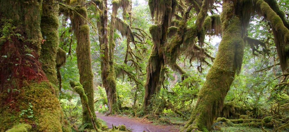 Day 2: Drive to Hoh Rain Forest (two hours from Sea Cliff Gardens)
