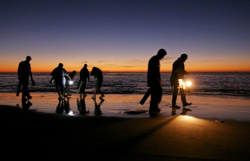 Romance in a razor clam tide