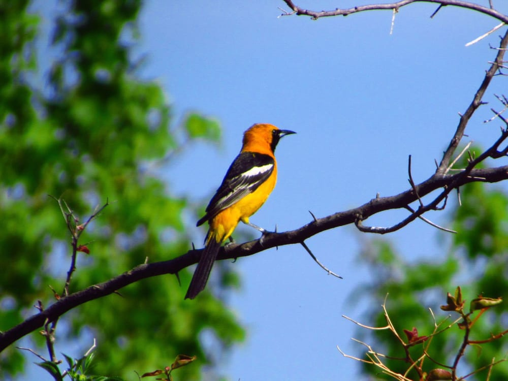 2 Best Birdwatching Locations near Los Angeles and The Place to Stay