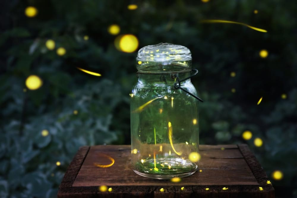 Fireflies Light The Evening Skies!