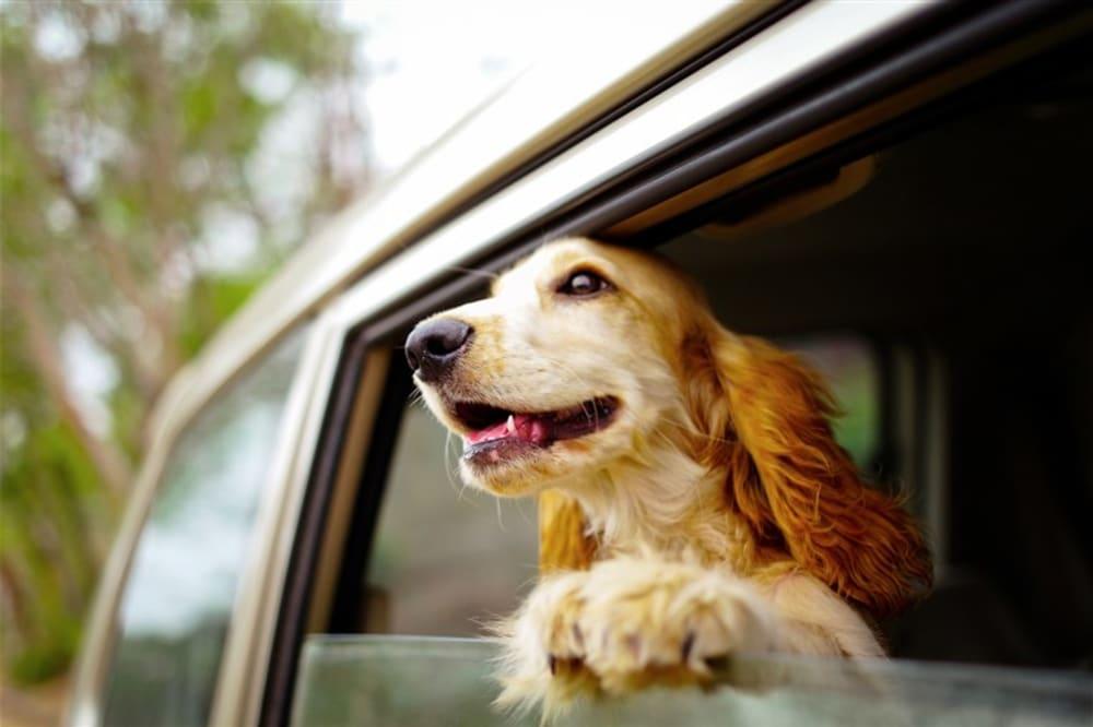 Dog(gie) Days Of Summer