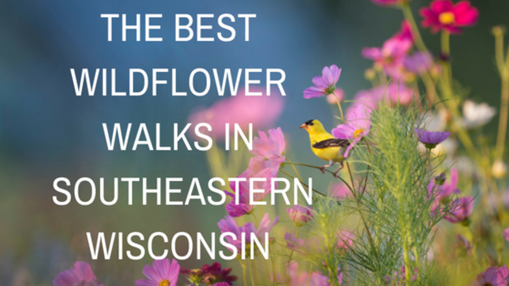 The Best Wildflower Walks in Southeastern Wisconsin