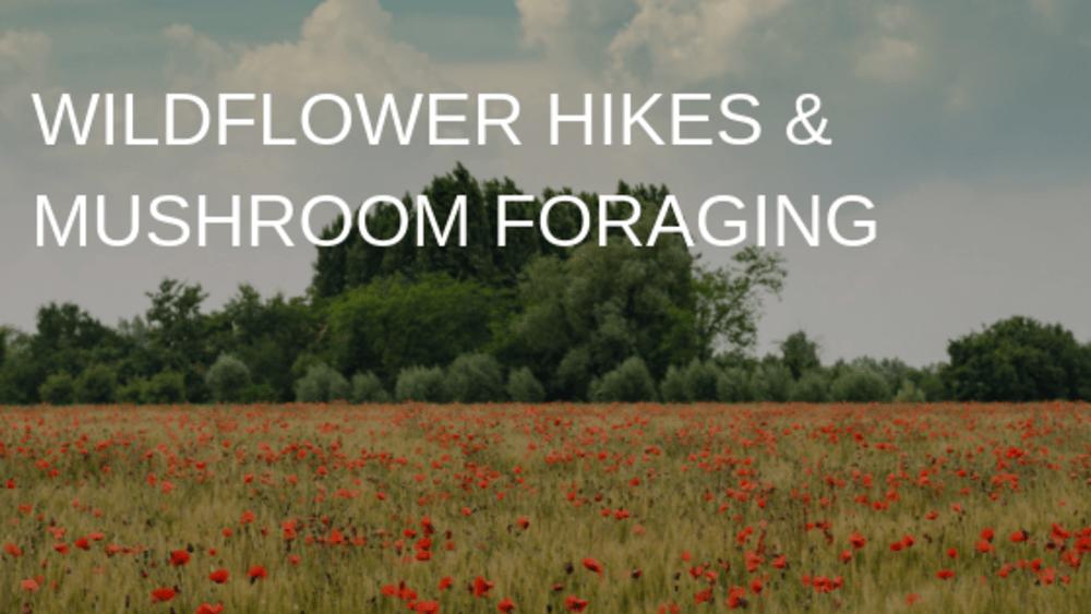 Wildflower Hikes & Mushroom Foraging
