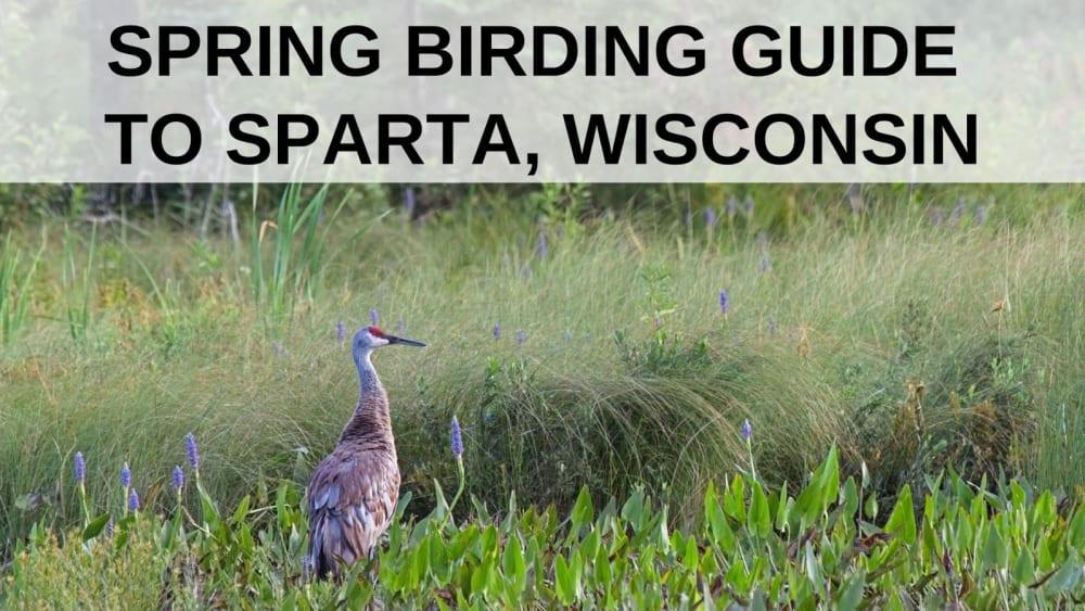 Spring Birding Guide to Sparta, Wisconsin