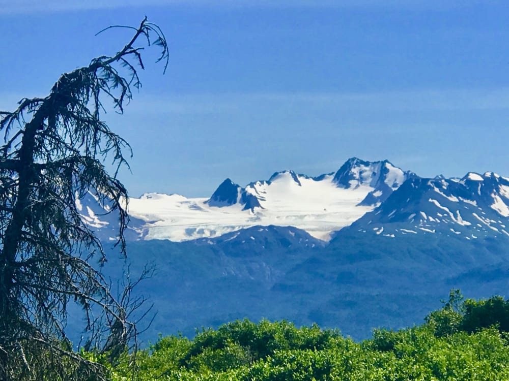 My Four Favorite Hikes and Walks in Homer