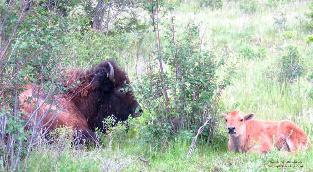 Springtime Animal Babies in Western Montana near Bear Spirit Lodge
