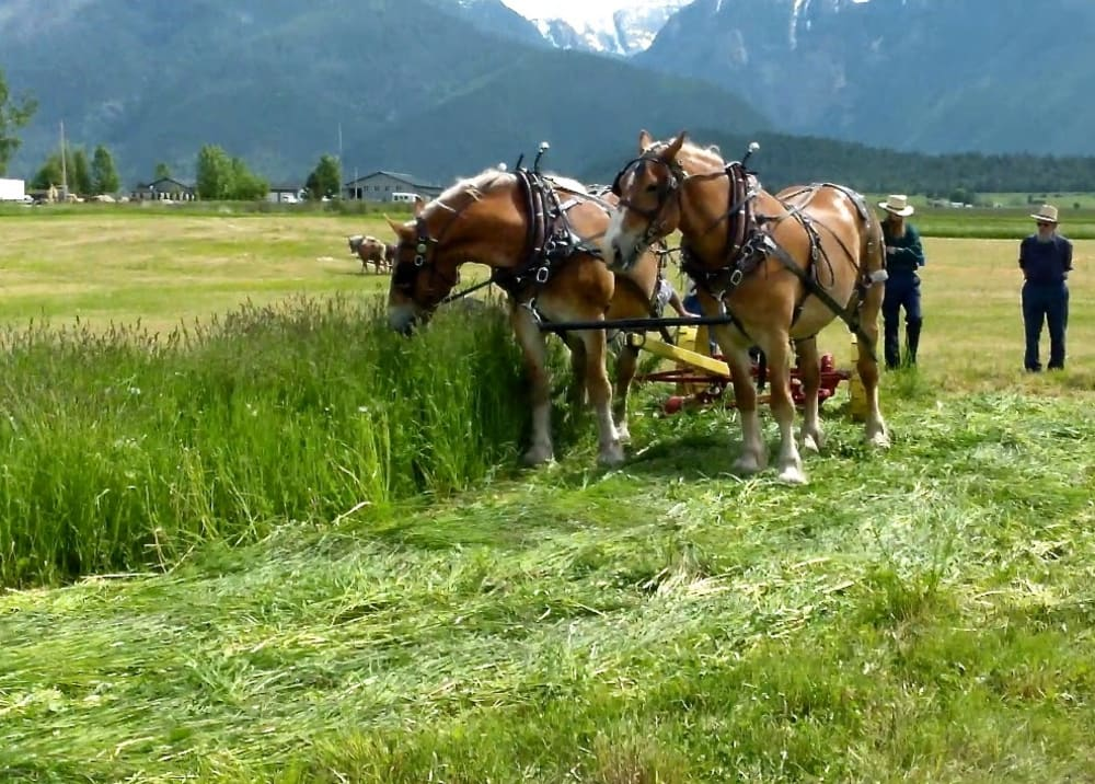 Progressive Horse Days near Bear Spirit Lodge June 7th