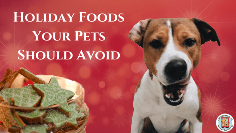 Holiday Foods Your Pets Should Avoid