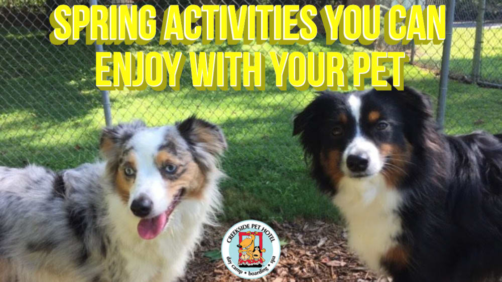 Spring Activities You Can Enjoy With Your Pet