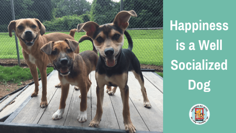 Happiness is a Well Socialized Dog