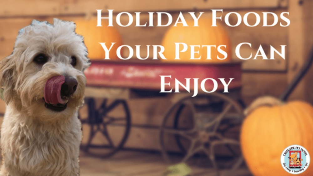 Holiday Foods Your Pets Can Enjoy