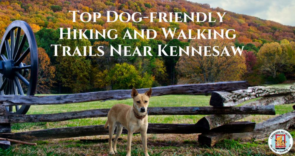 Top Dog Friendly Hiking And Walking Trails Near Kennesaw Georgia