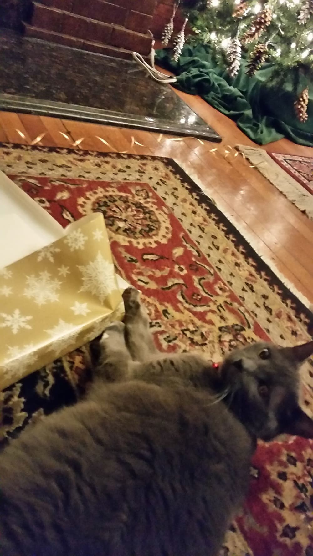 Simon Helping with Gift Wrapping