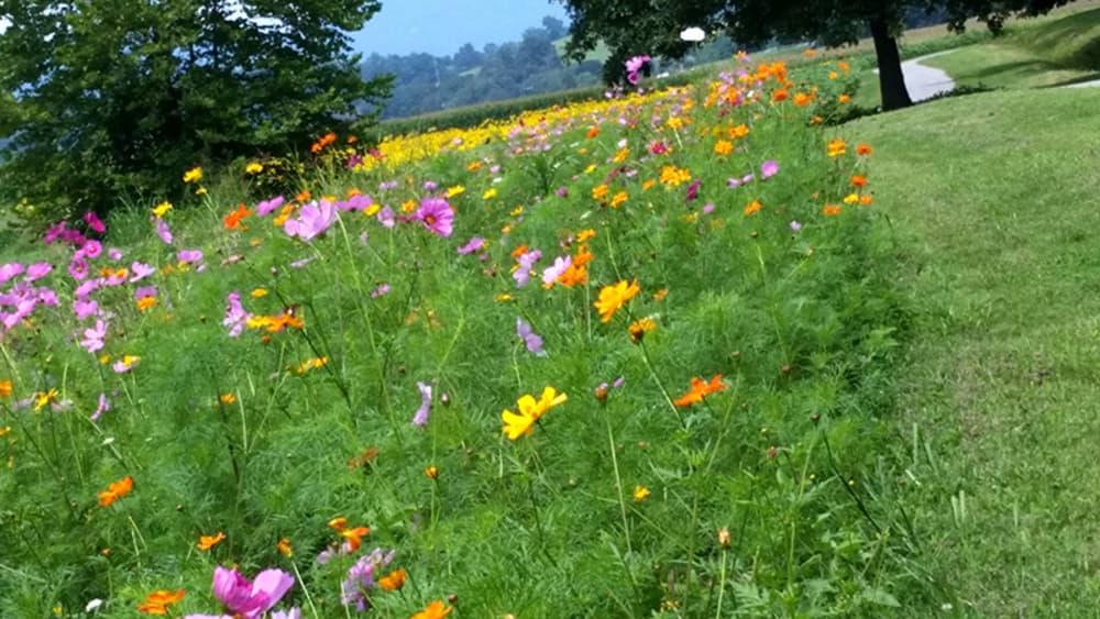 Wildflowers at Biltmore