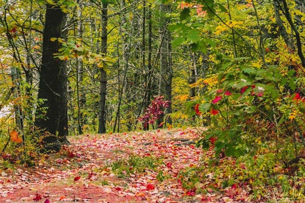 Fall Foliage - Maine's Fifth Season