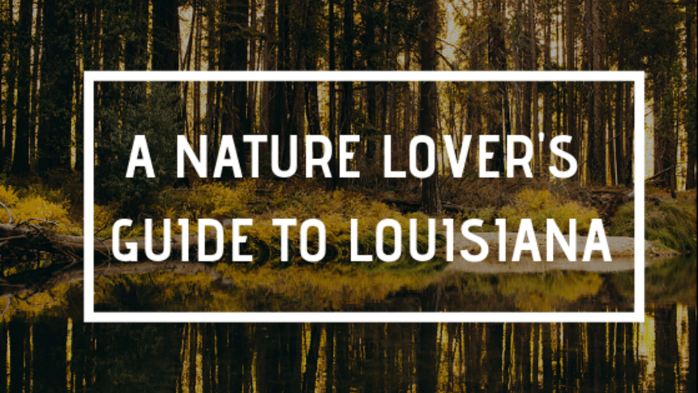 A Nature Lover's Guide to Louisiana