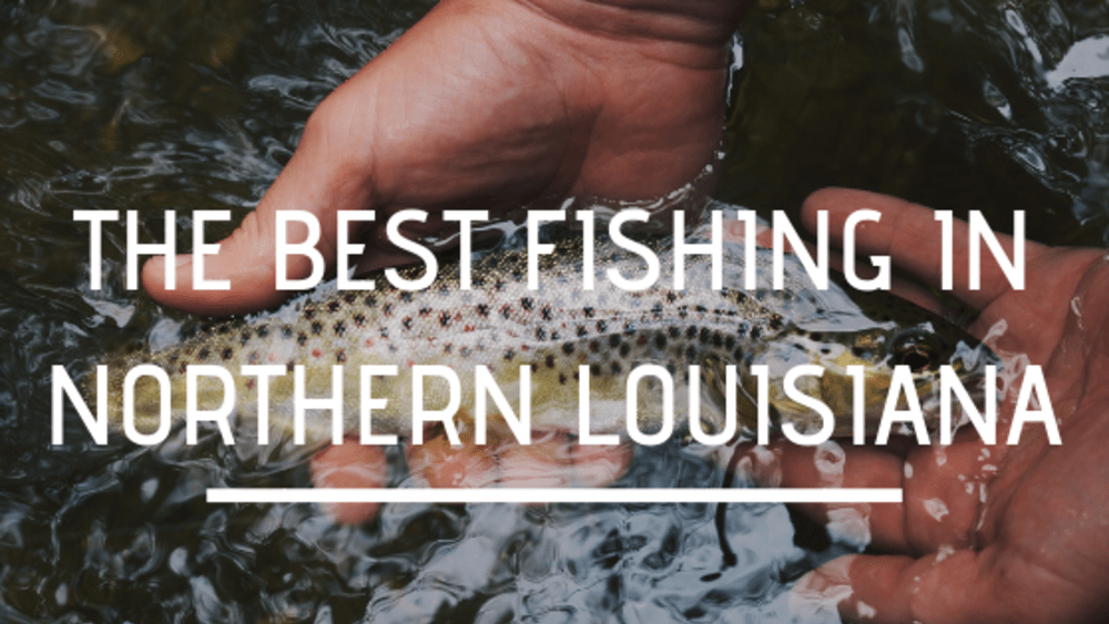 The Best Fishing in Northern Louisiana
