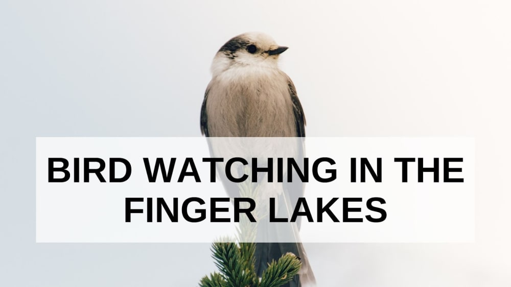 Bird Watching in the Finger Lakes