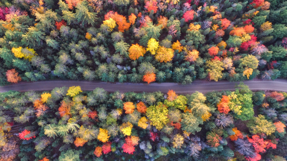 Best Leaf-Peeping in the Hudson Valley 2017