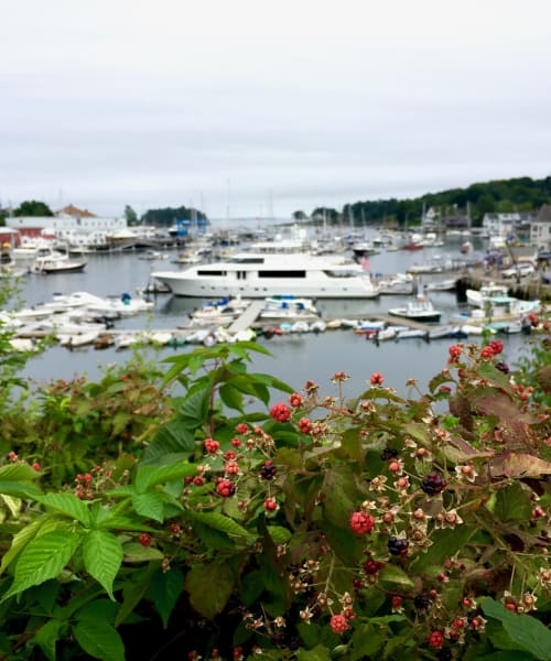 harbor with many boats and yachts