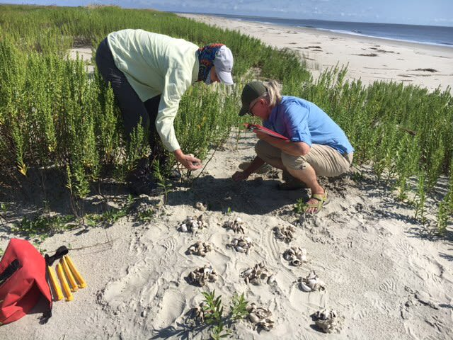 LSSI Sea Turtles Receive Helping Hands from Many During a Record-Breaking Nesting Season