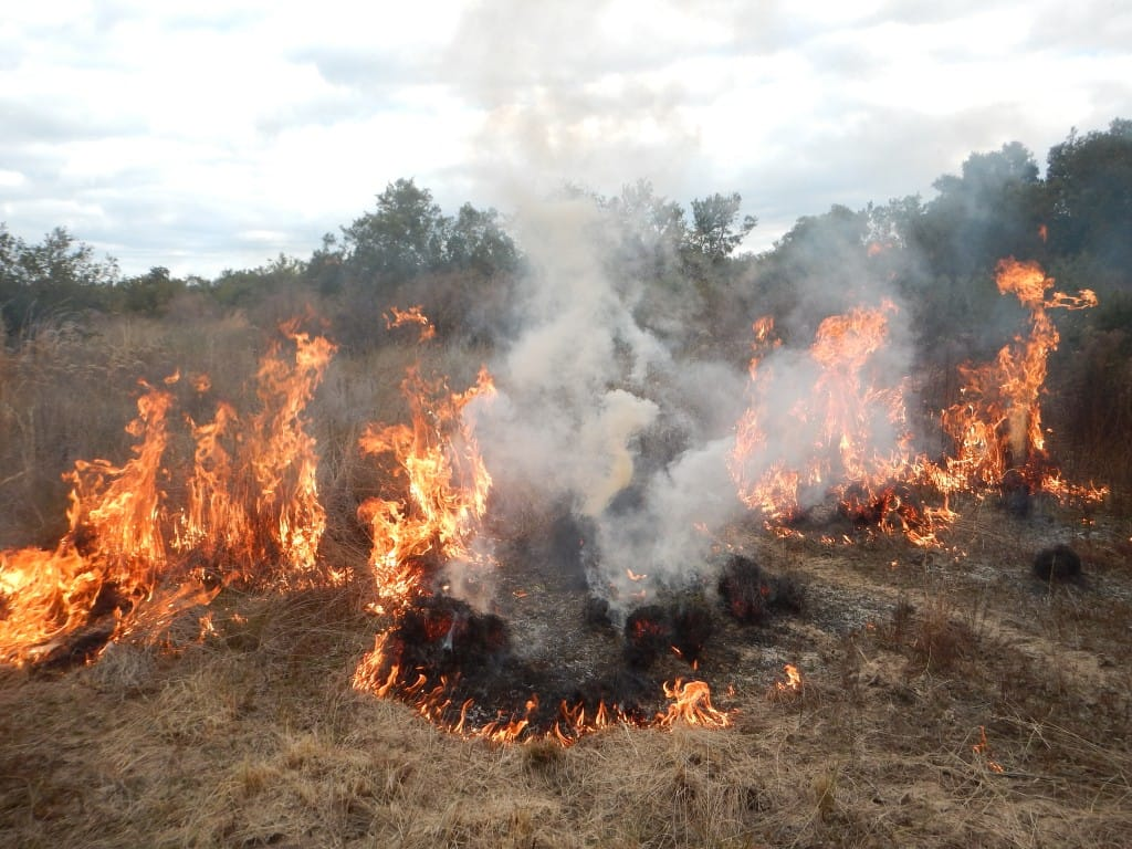 Prescribed Burn: February 2015