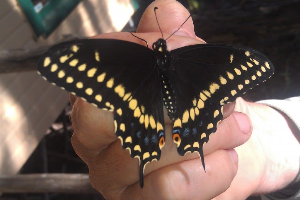 Butterflies growing in the garden