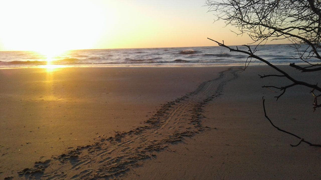 The Start of Sea Turtle Nesting
