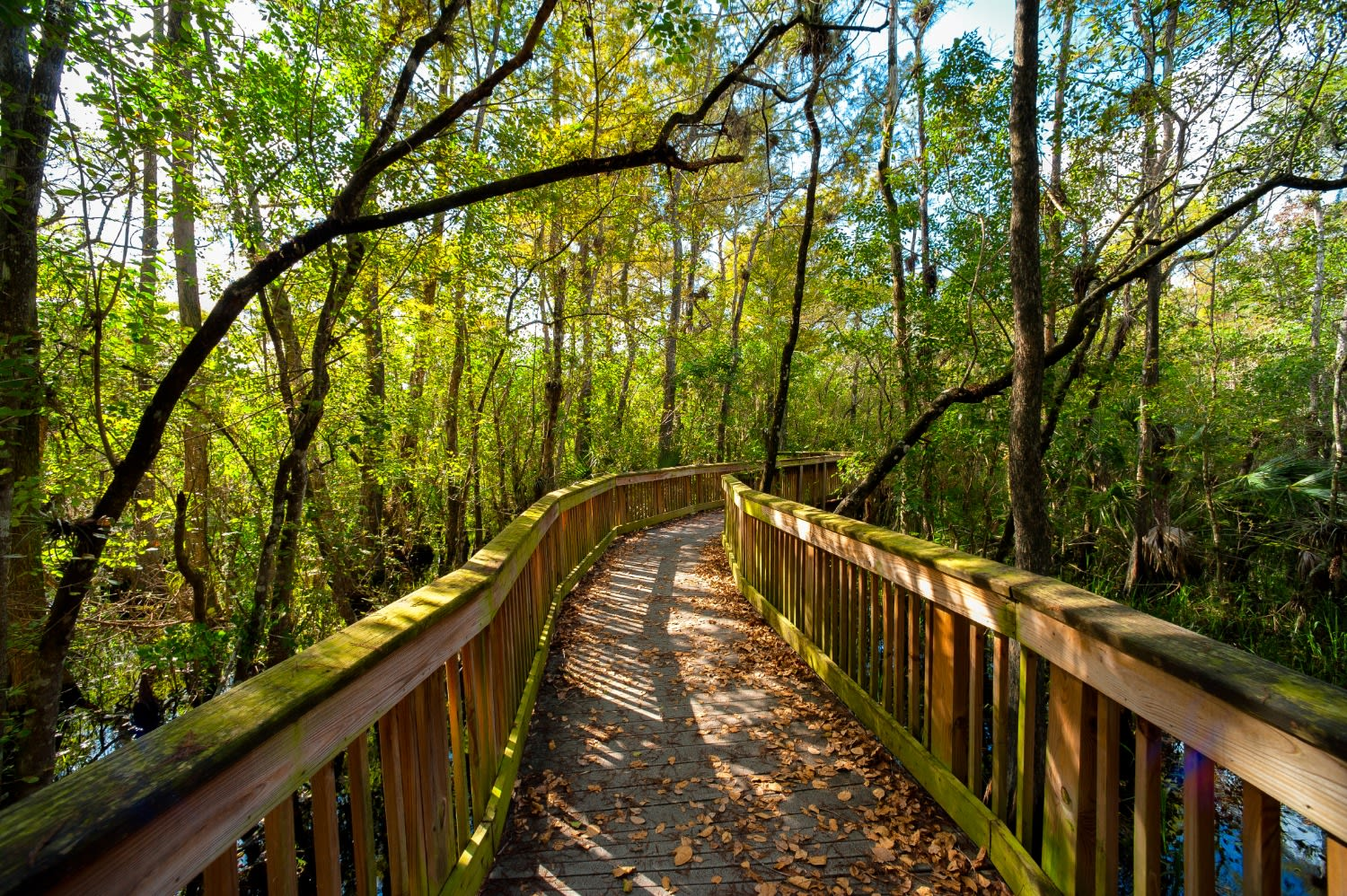 Asheville's Secret, Scenic and Secluded Bridges