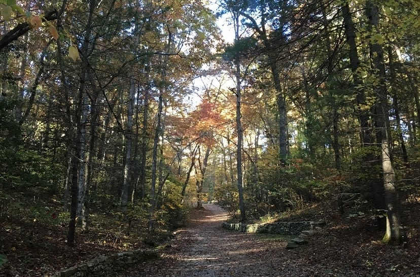 Everything You Need to Know About The North Carolina Arboretum