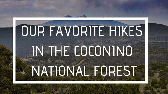 Our Favorite Hikes in the Coconino National Forest
