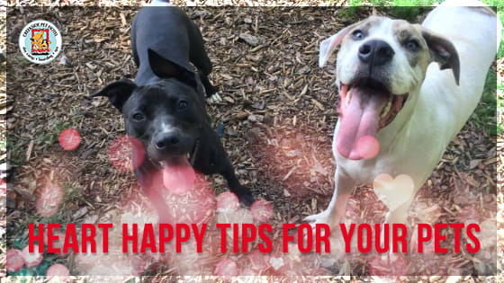 Heart Happy Tips for Your Pets