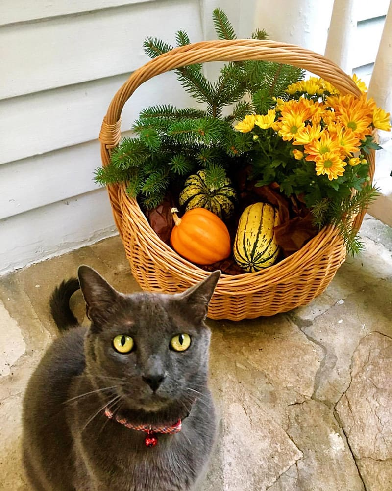 Simon Loves the Fall